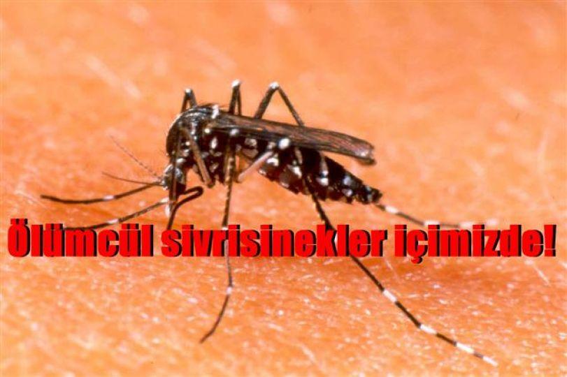 Sivrisineklerdeki sarı humma virüsüne dikkat!