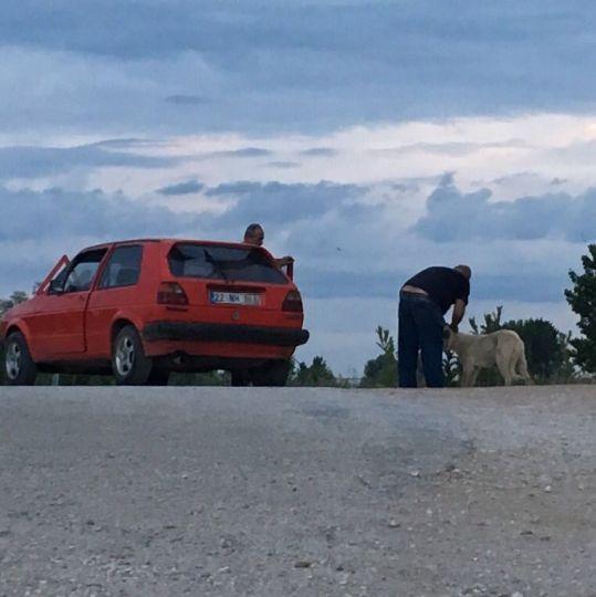 Arabaya bağlayıp çektiler!