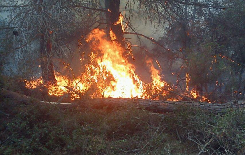 Keşan'da orman yangını!